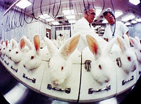 韩国将终止 动物化妆品实验